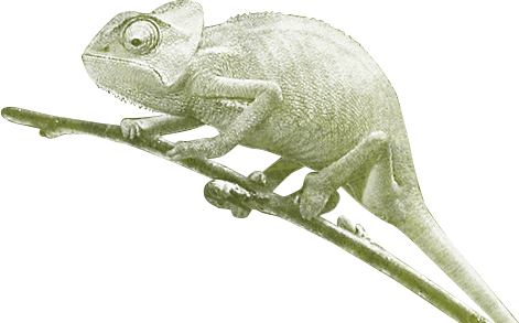 The Juuce Gecko
